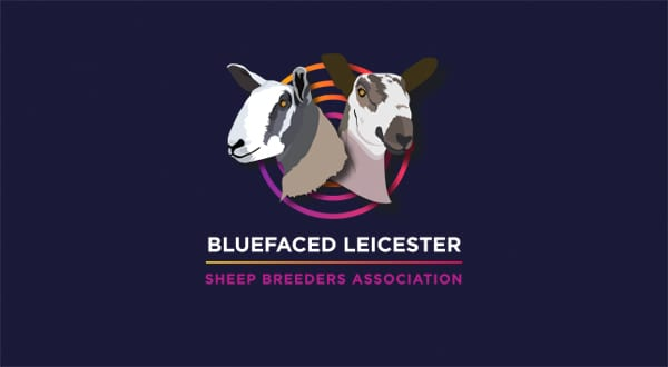 Bluefaced Leicester Online Show – July and August, 2021 News