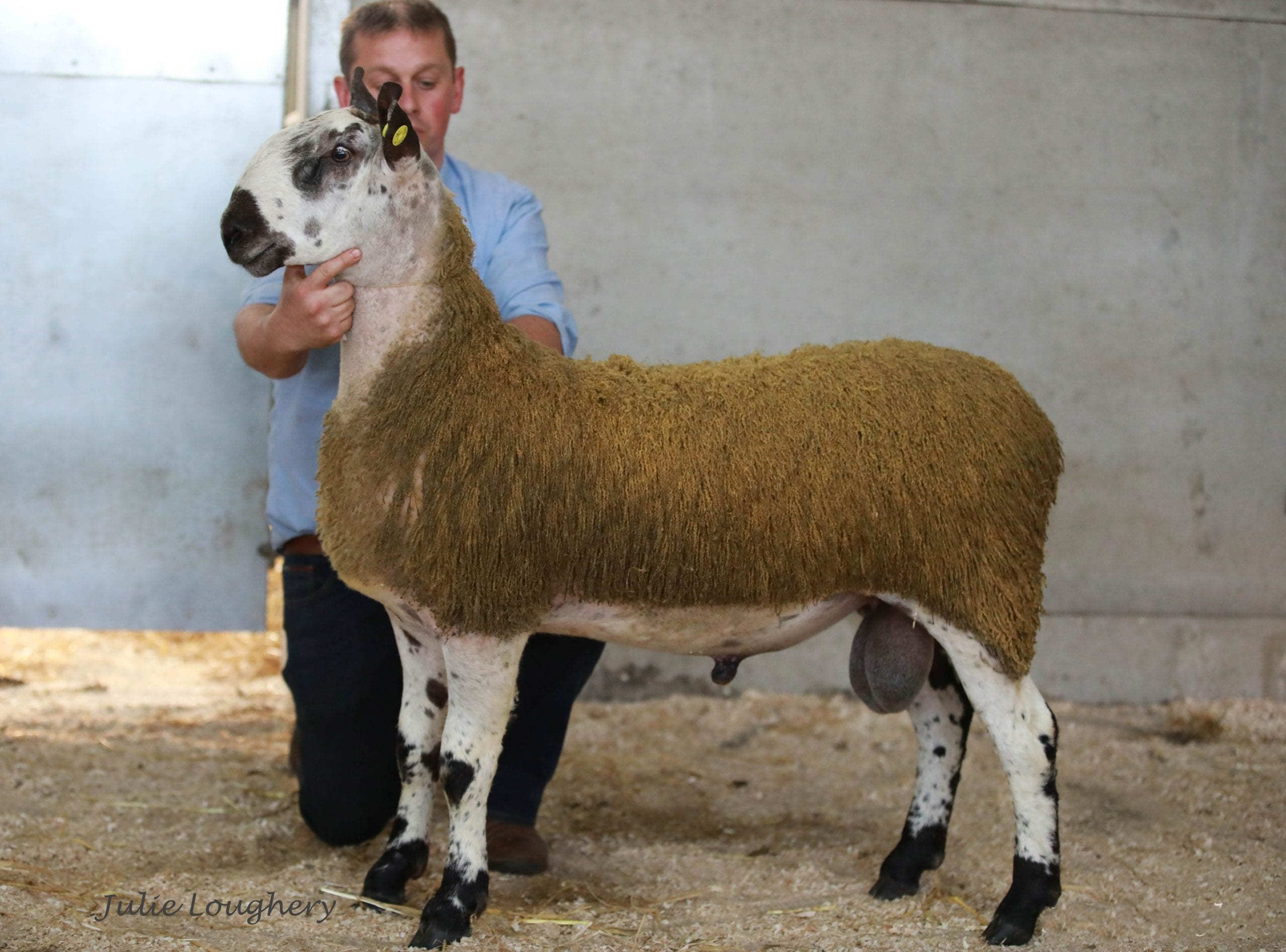 Ballymena Ram & Females Sale Sale Reports