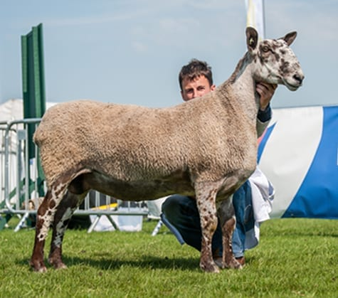 Balmoral Show Show Results
