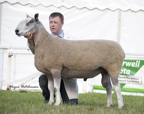 Royal Welsh Show Show Results