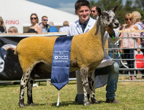 Royal Highland Show – Crossing Type Show Results