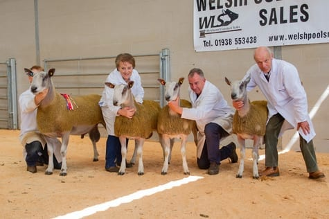 Wales & South West Progeny Show Image