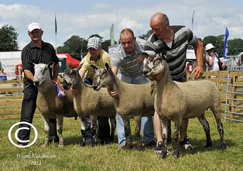 Northern Ireland Progeny Show Show Results