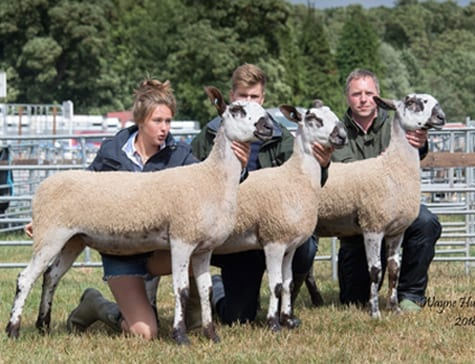 Penrith Progeny Show Crossing Type & Mule Progeny Results Show Results
