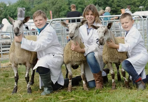 Scottish Progeny Show Crossing Type & Mules Show Results