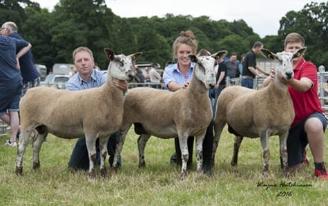 Penrith Progeny Show – Crossing Type & Mules Show Results