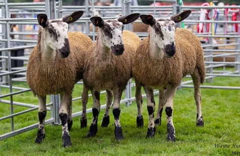 Scottish Progeny Show – Crossing Type & Mules Show Results