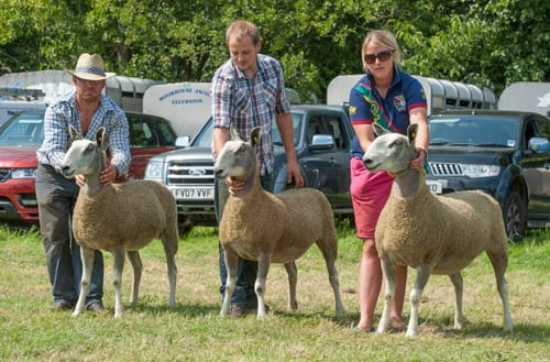 Penrith Progeny Show Show Results