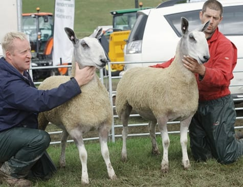 Scottish Progeny Show – Traditional Show Results