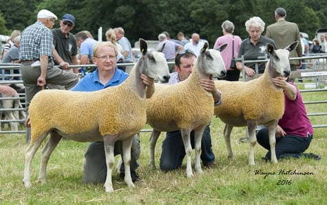 Penrith Progeny Show – Traditional Show Results