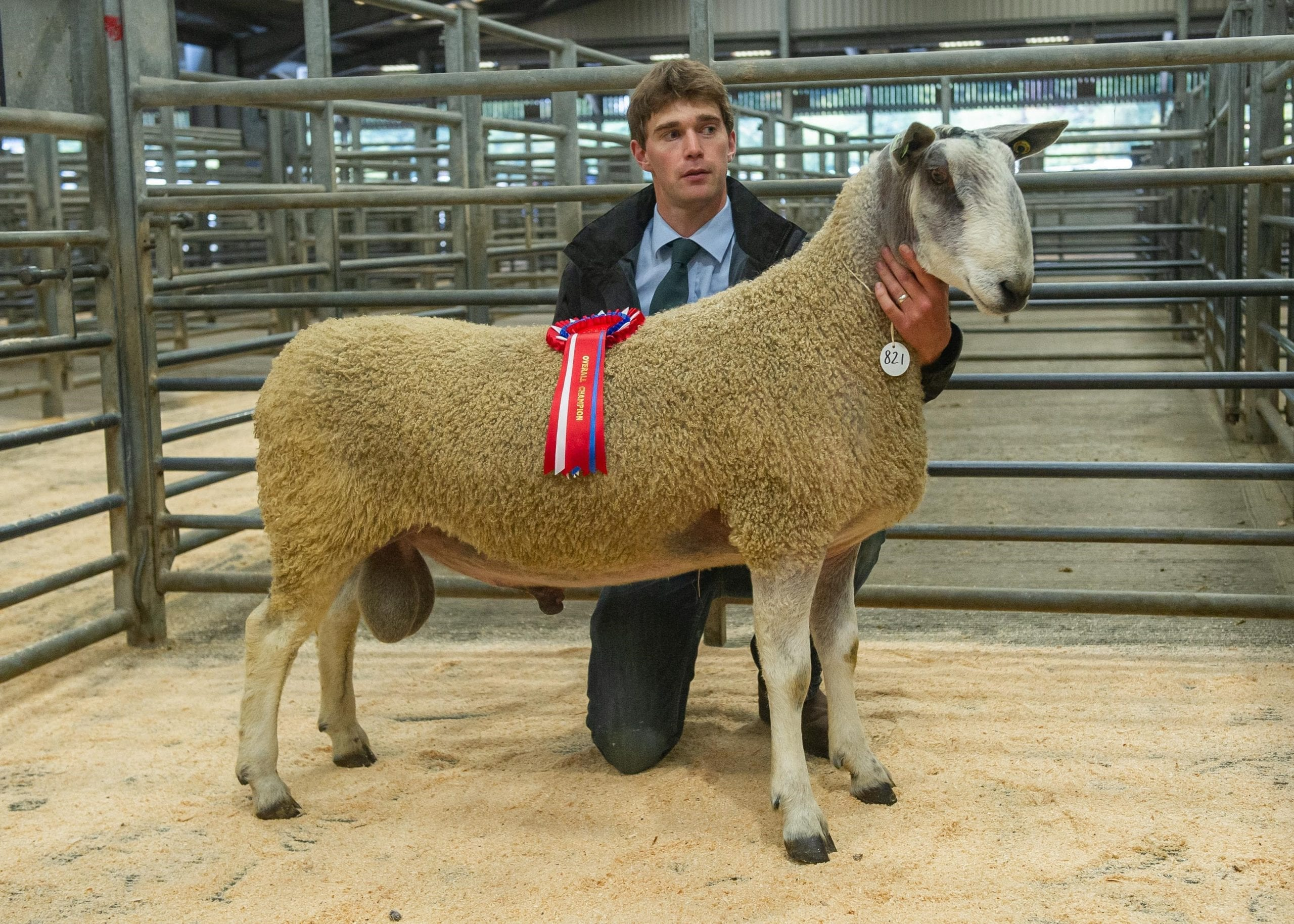 Hexham Ram Sale Sale Reports