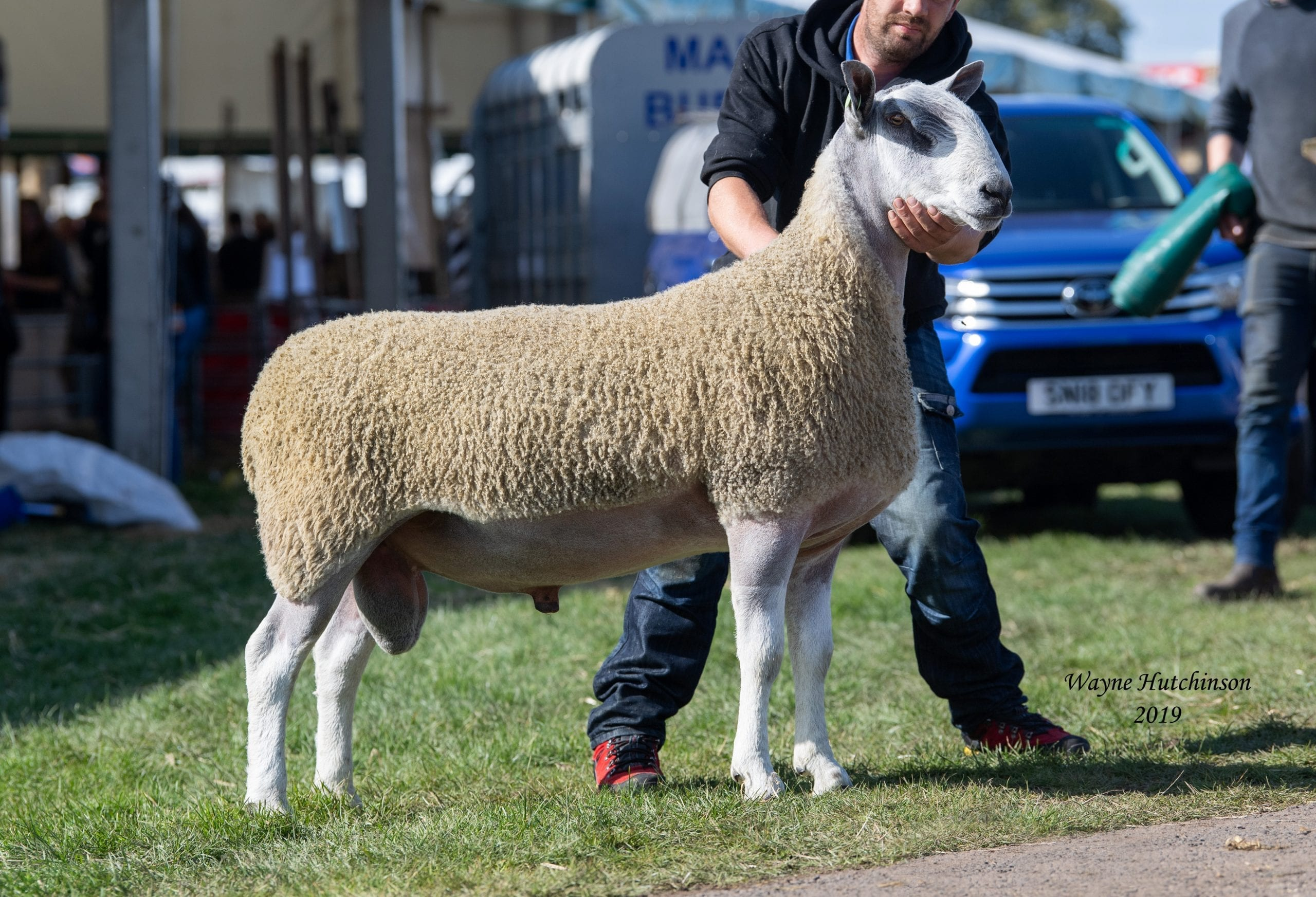 Kelso Ram Sale Traditional Type Sale Reports