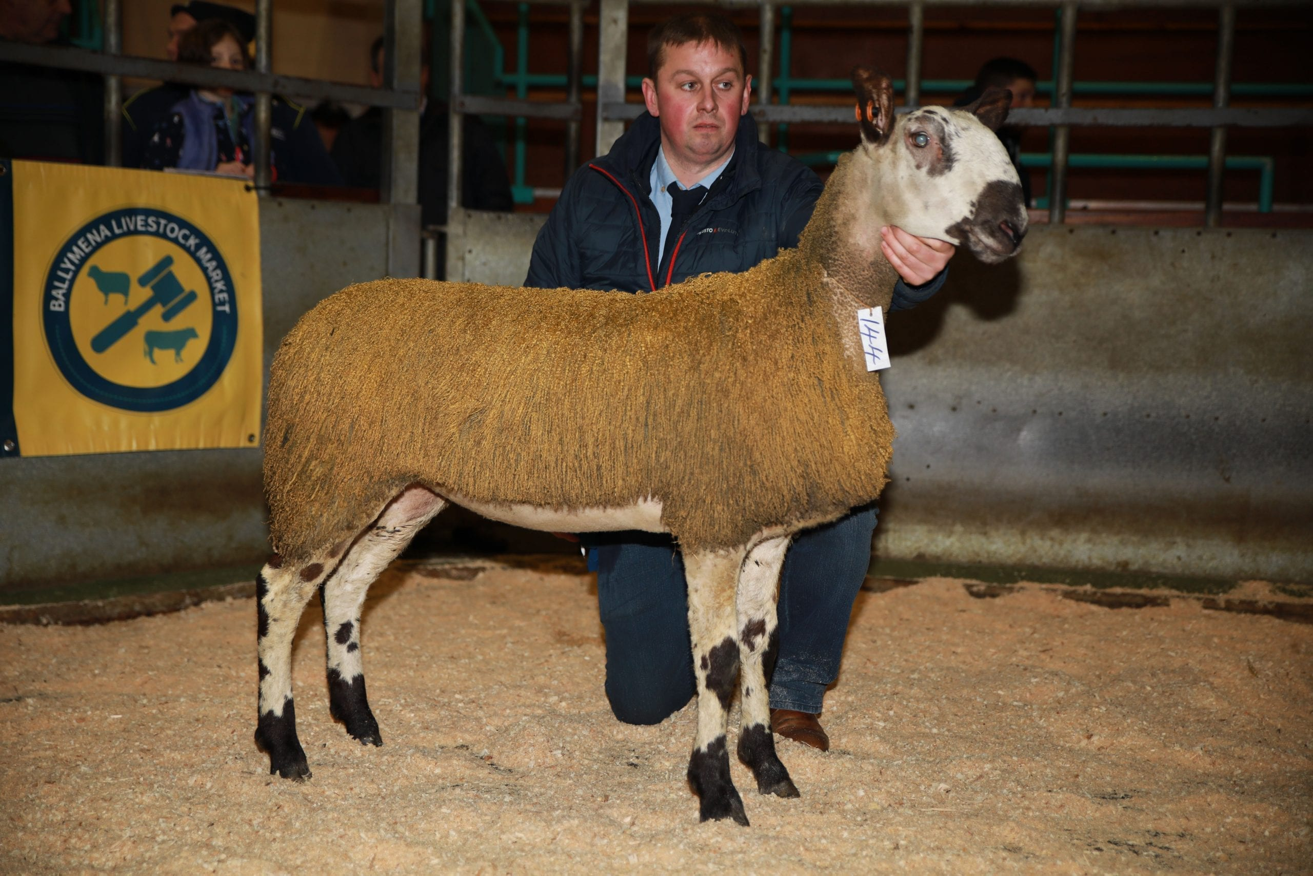 Ballymena Female Sale Sale Reports