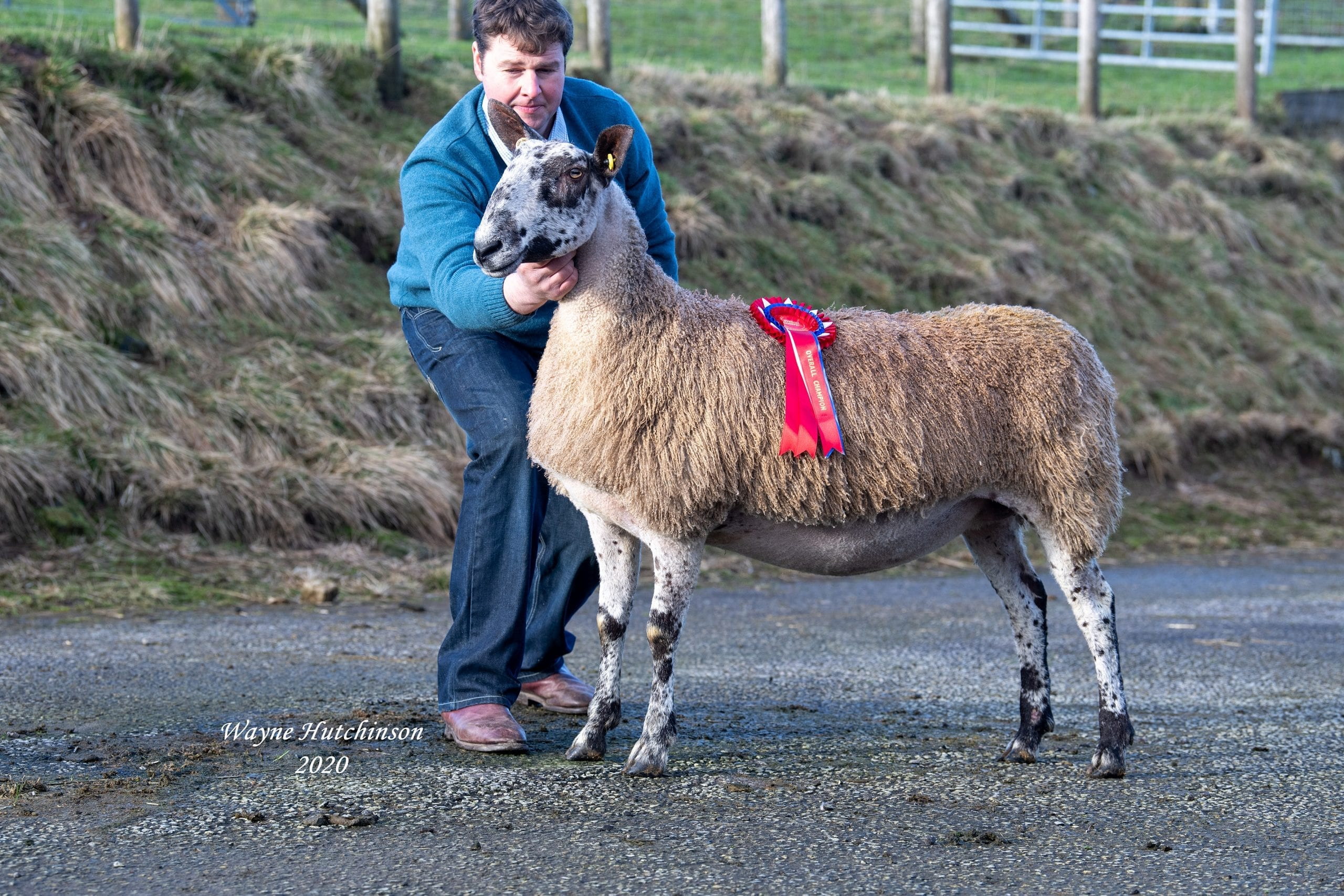 Hawes Female Sale Sale Reports