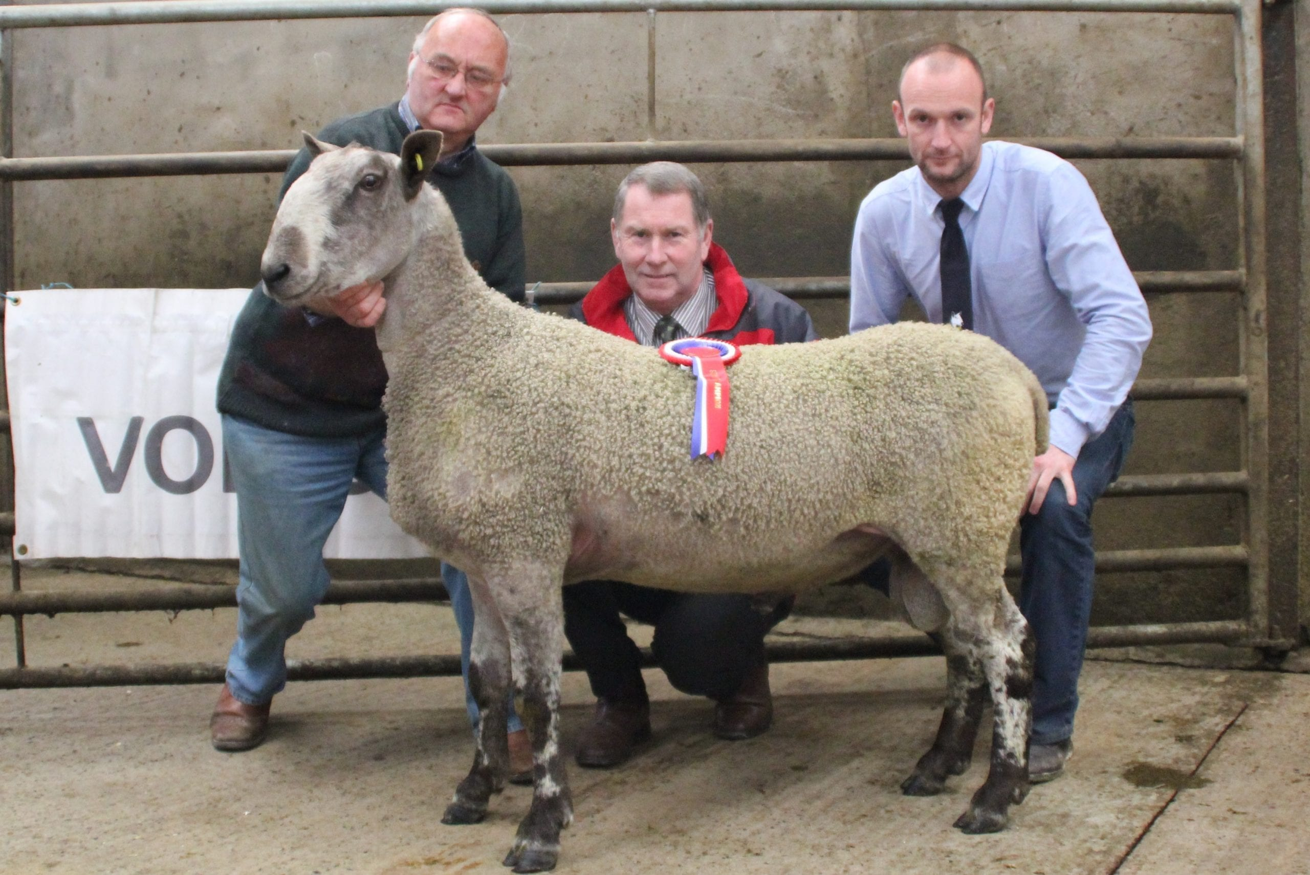 Armoy Ram & Female Sale Sale Reports