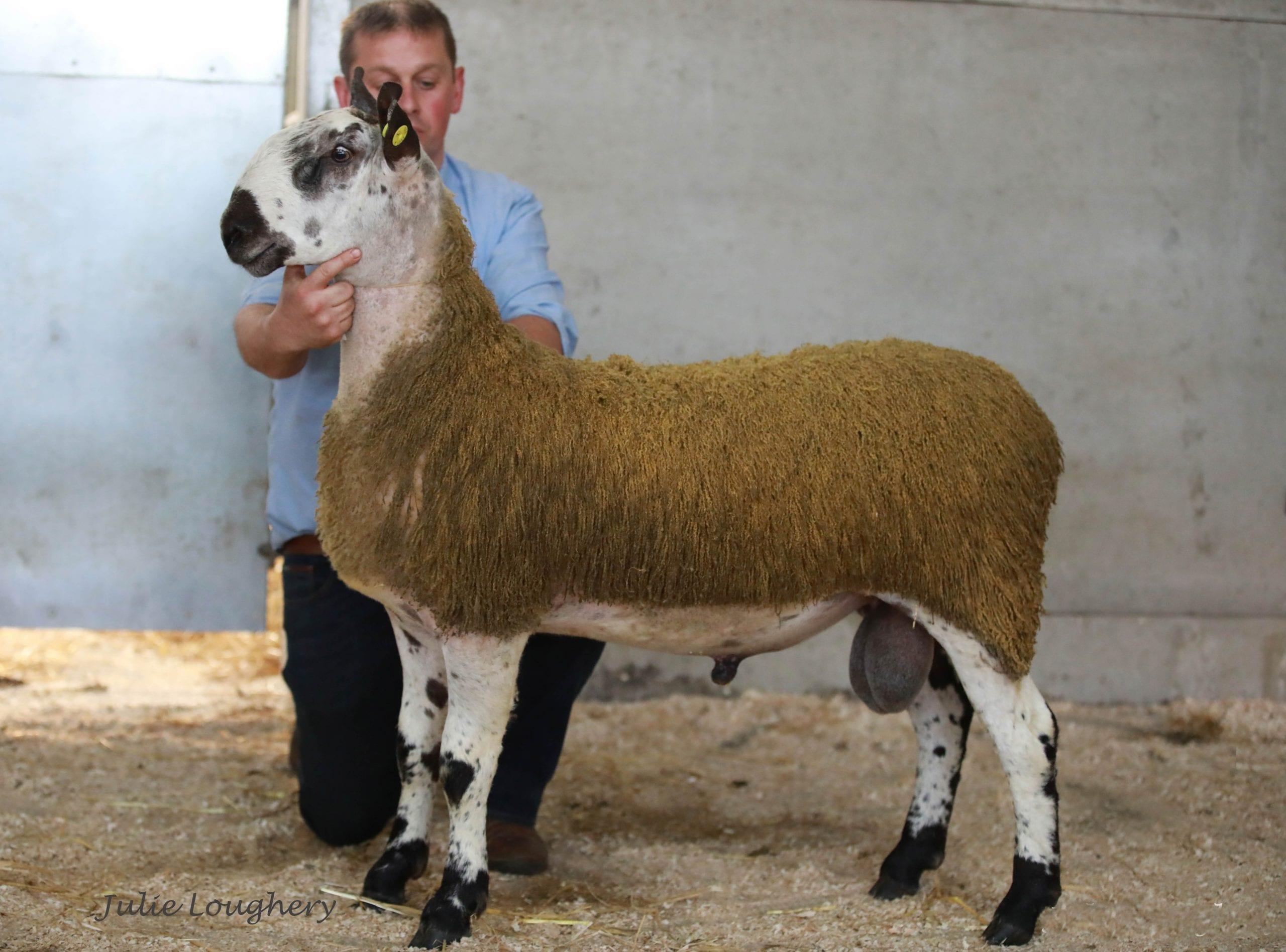 Ballymena Rams & Females Image