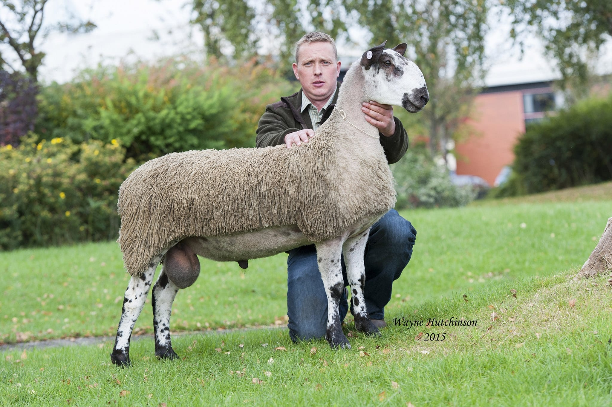 Carlisle Crossing Type Rams & Female Sale Sale Reports