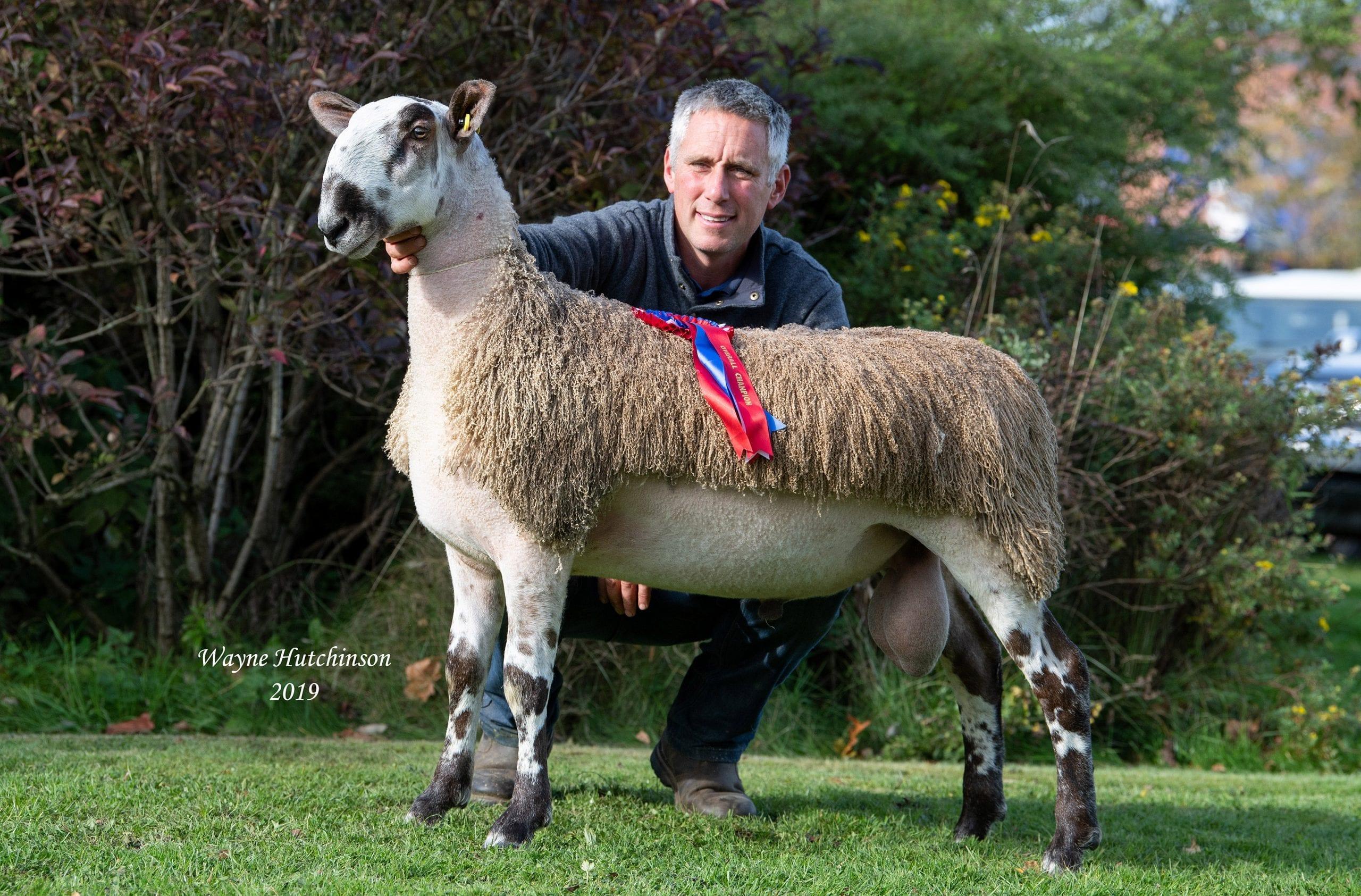 Carlisle Rams & Females Crossing Type Image