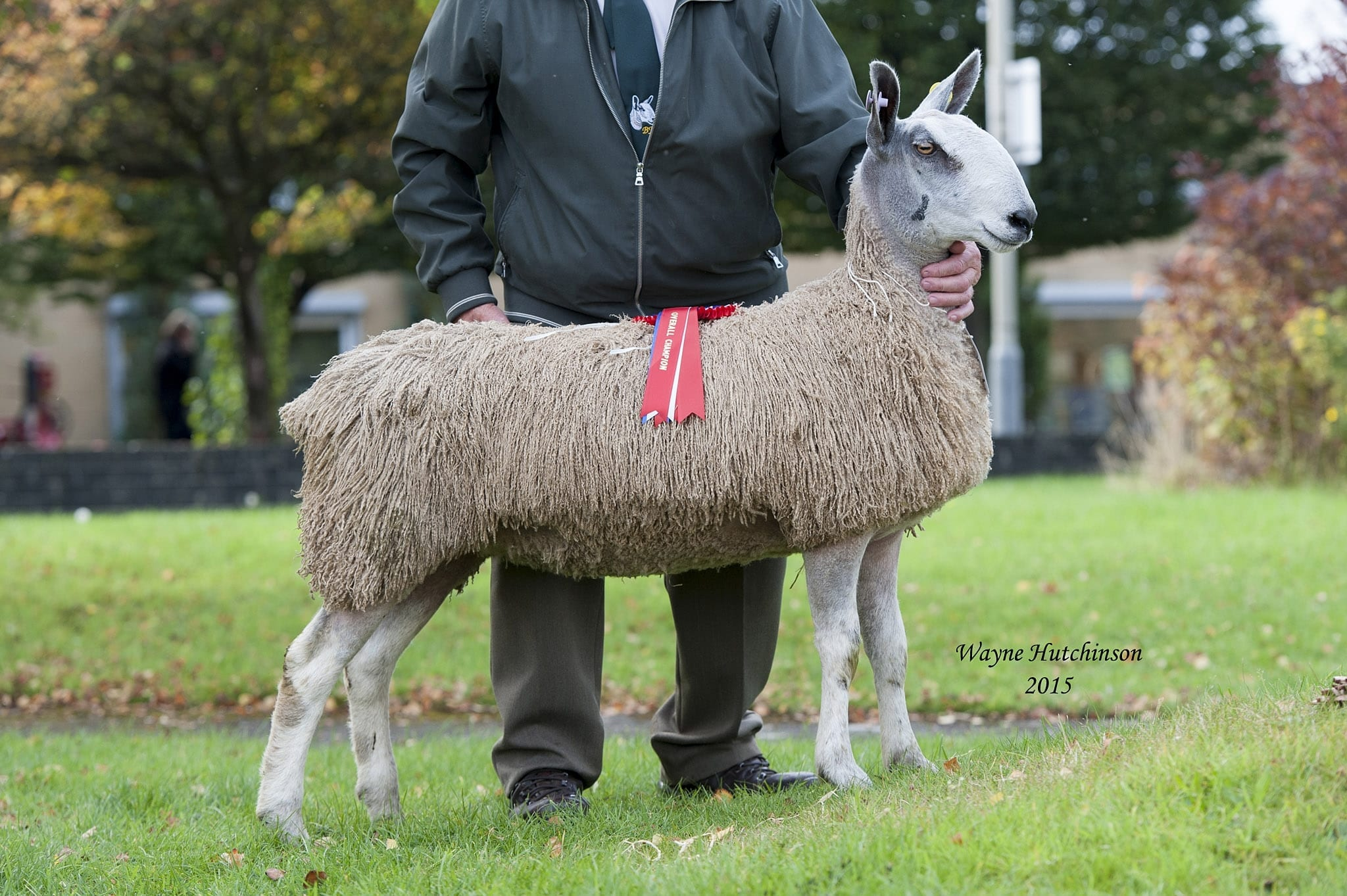 Carlisle Traditional Type Rams & Female Sale Sale Reports
