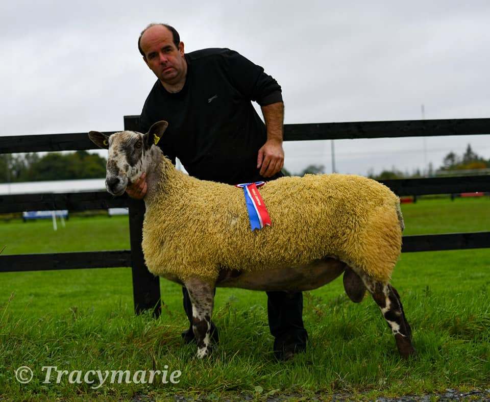 Carrick on Shannon Ram Sale Sale Reports