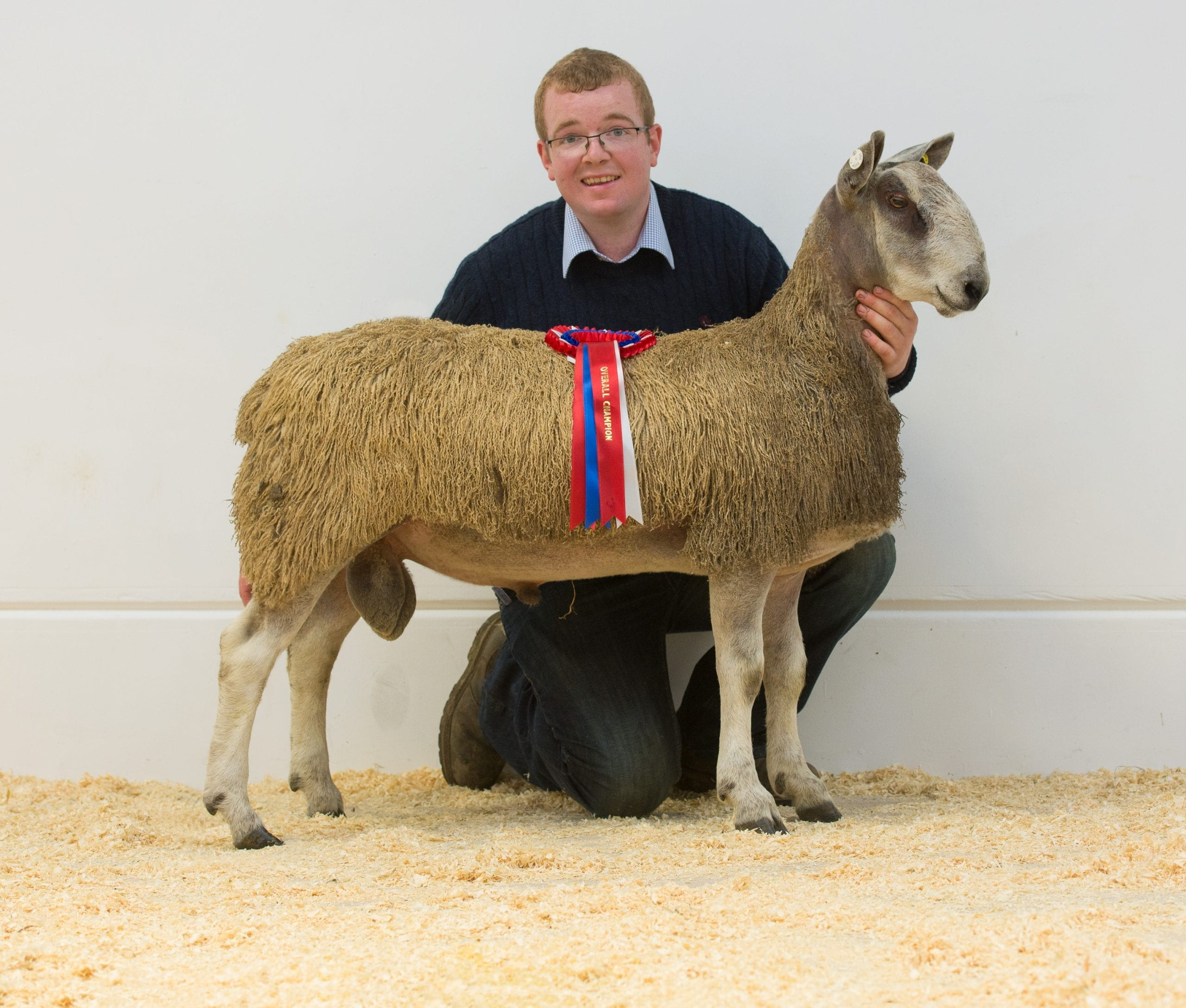 Ruthin Rams & Female Sale Sale Reports