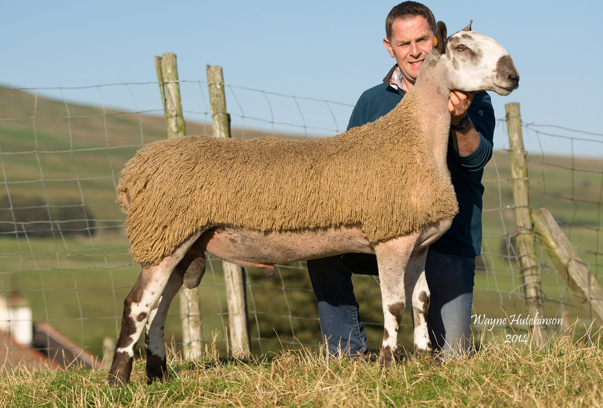 Hawes Ram & Female Sale Sale Reports