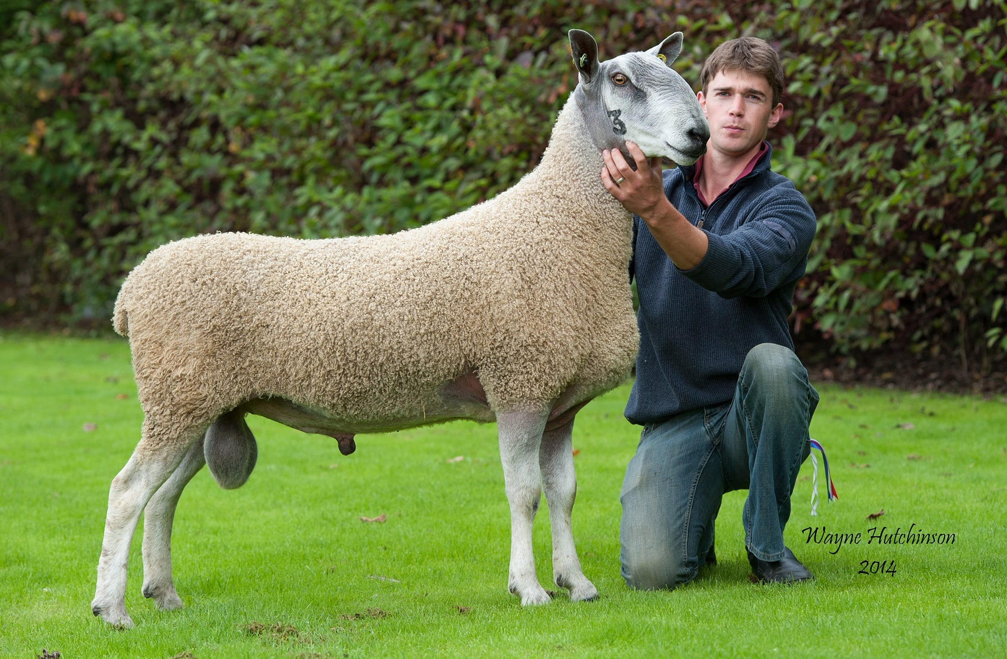 Hexham Ram & Female Sale Sale Reports