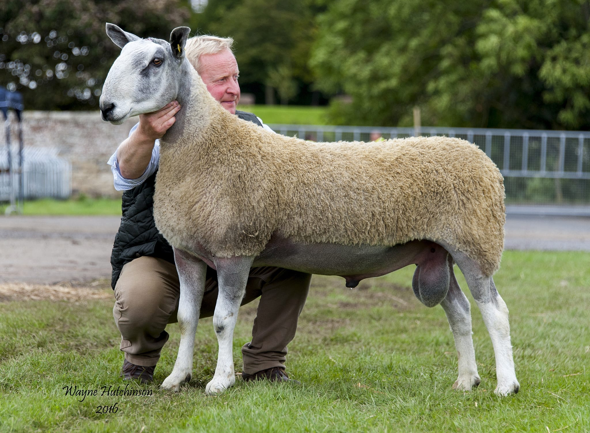 Kelso Ram Sale – Traditional Type Sale Reports