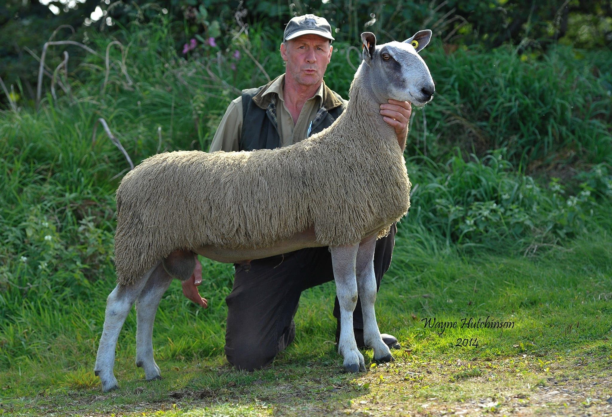 Longtown Ram & Female Sale 2014 Sale Reports