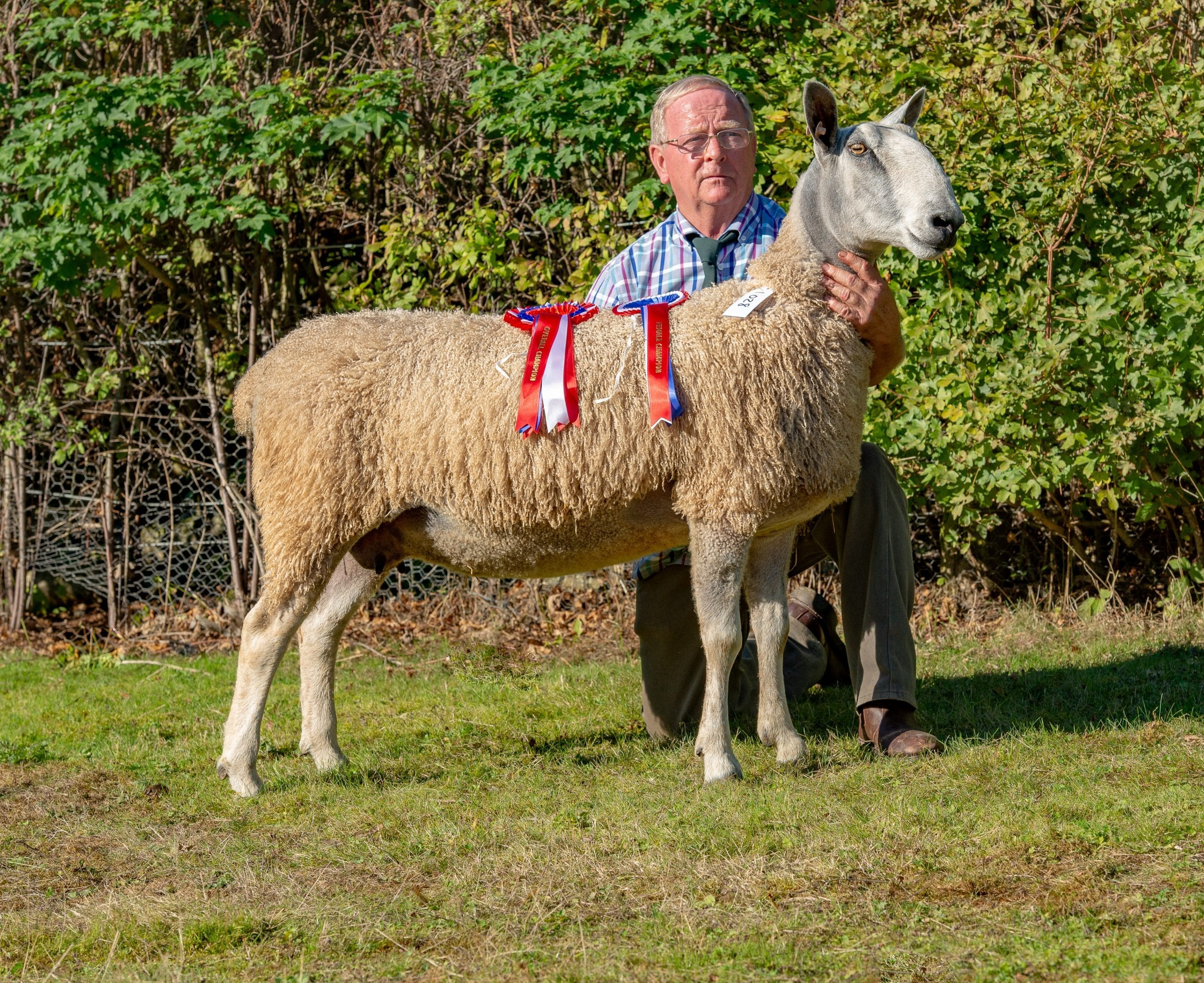 Welshpool Rams and Females Sale Reports