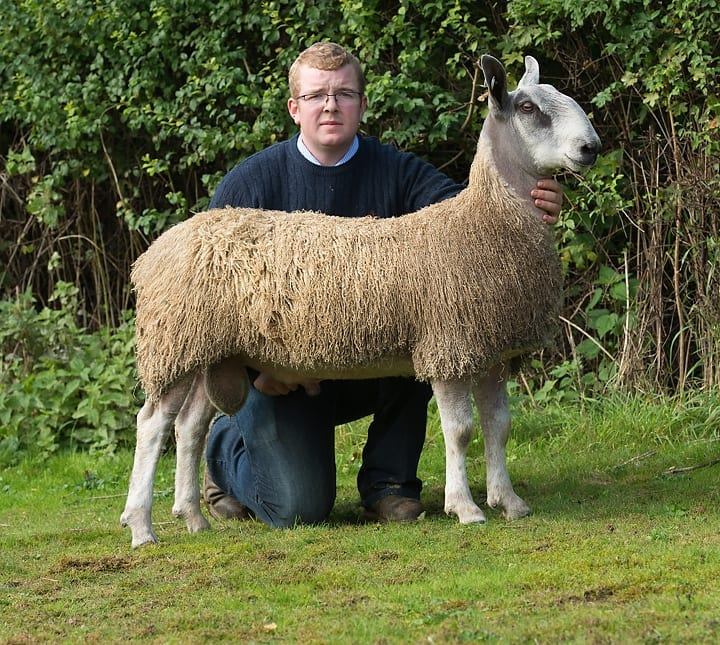 Welshpool Ram & Female Sale Sale Reports
