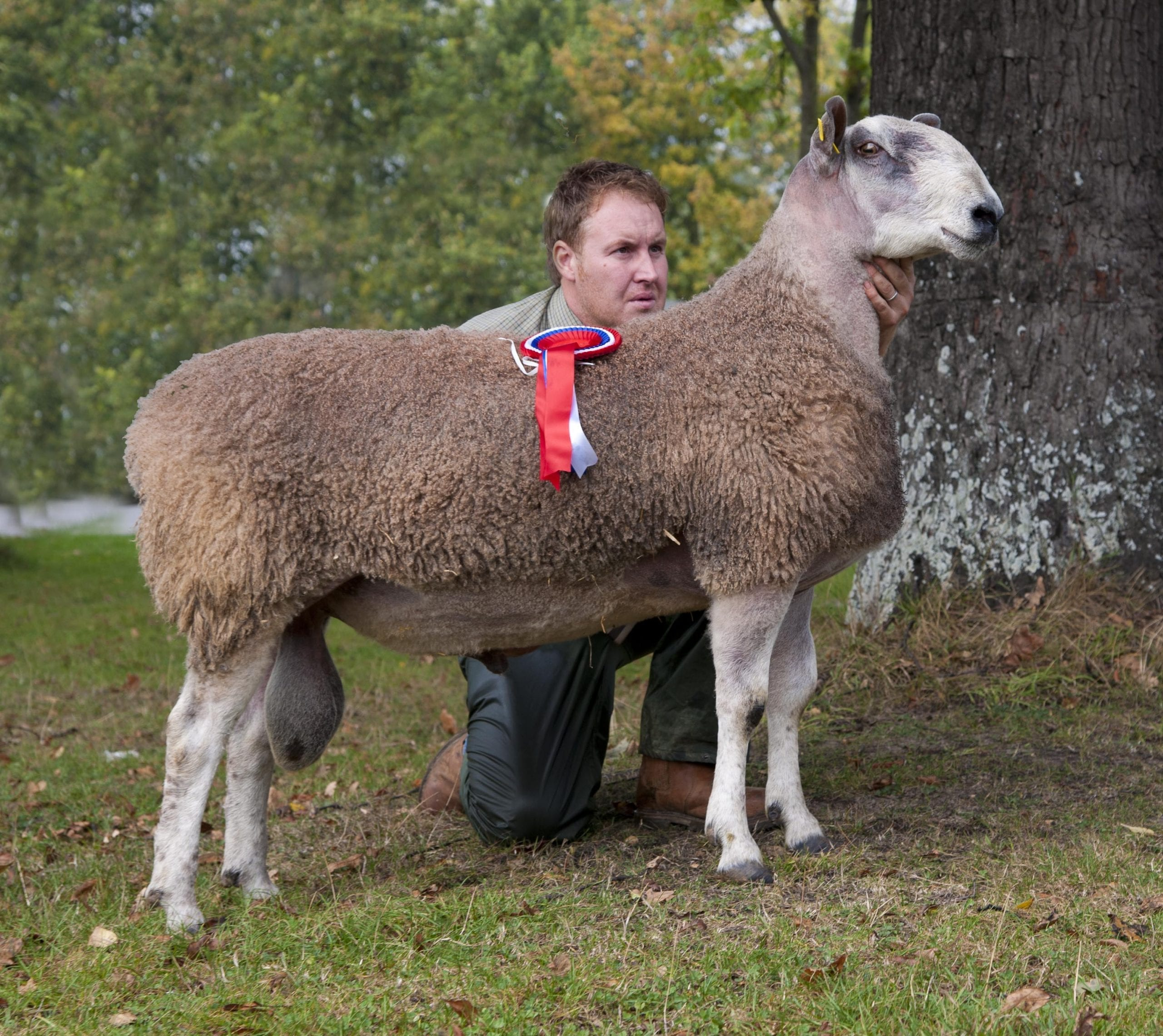 Ruthin Ram & Female Sale Sale Reports