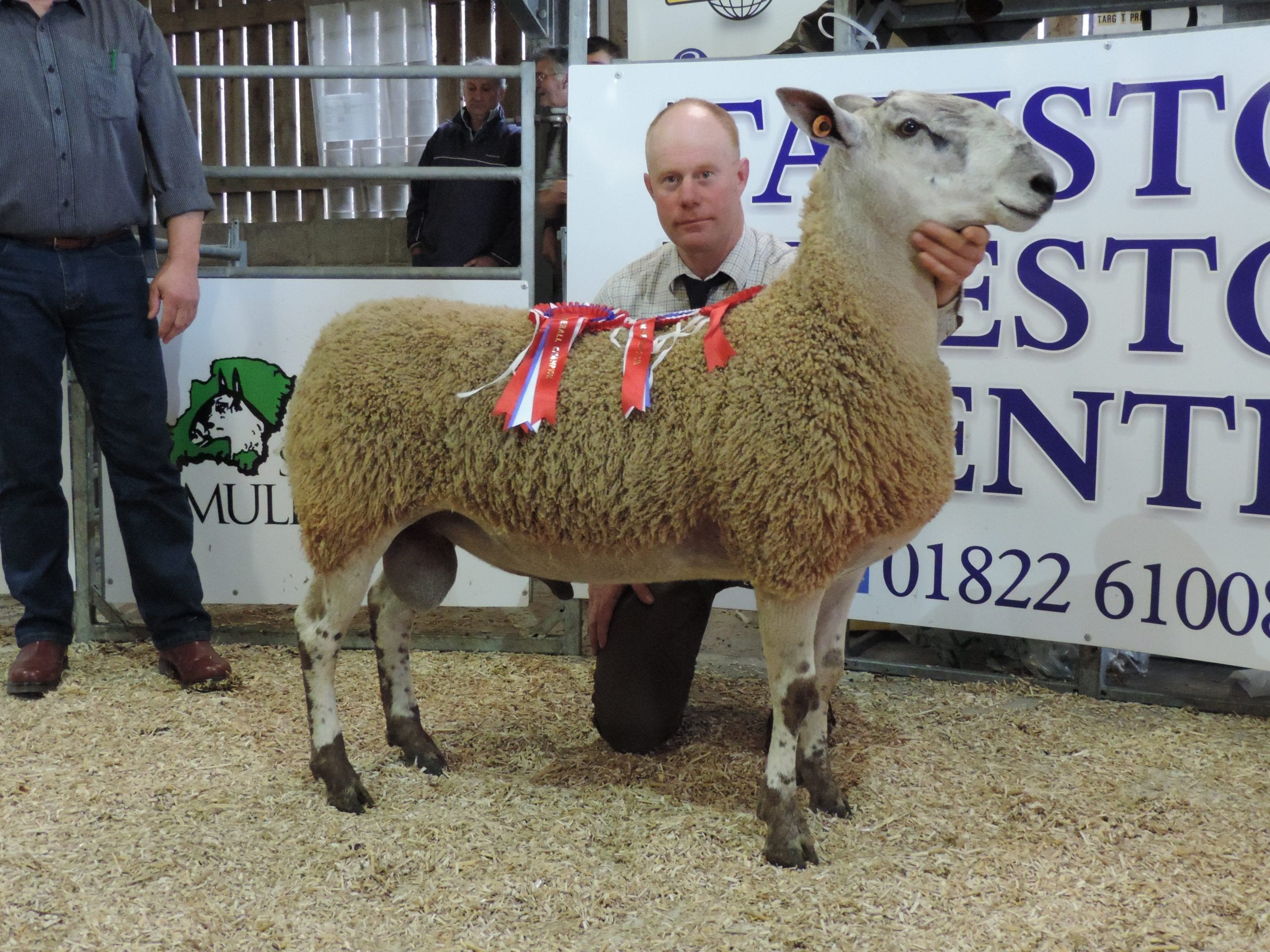 Tavistock Ram & Female Sale Sale Reports
