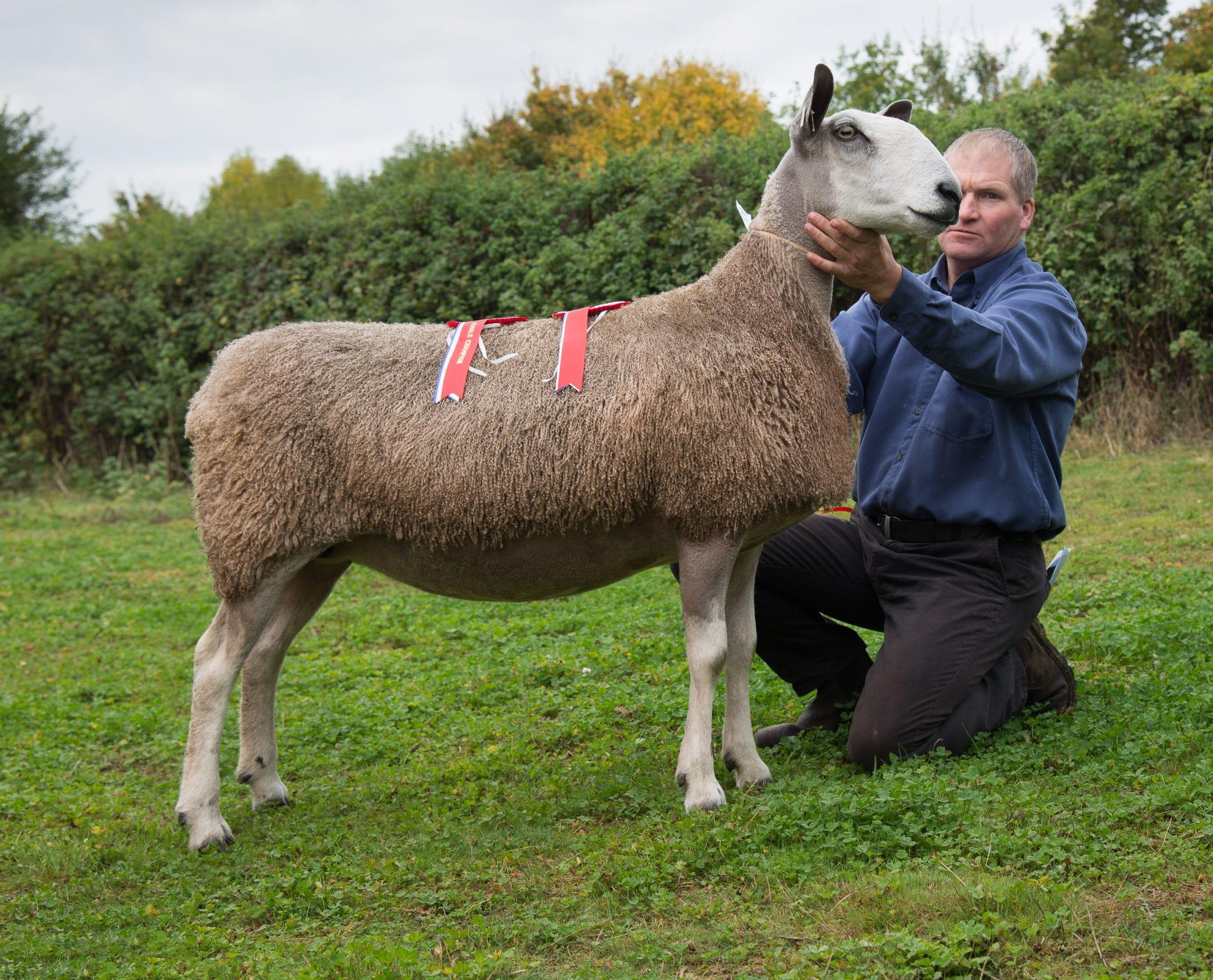 Welshpool Ram & Female Sale Sale Reports