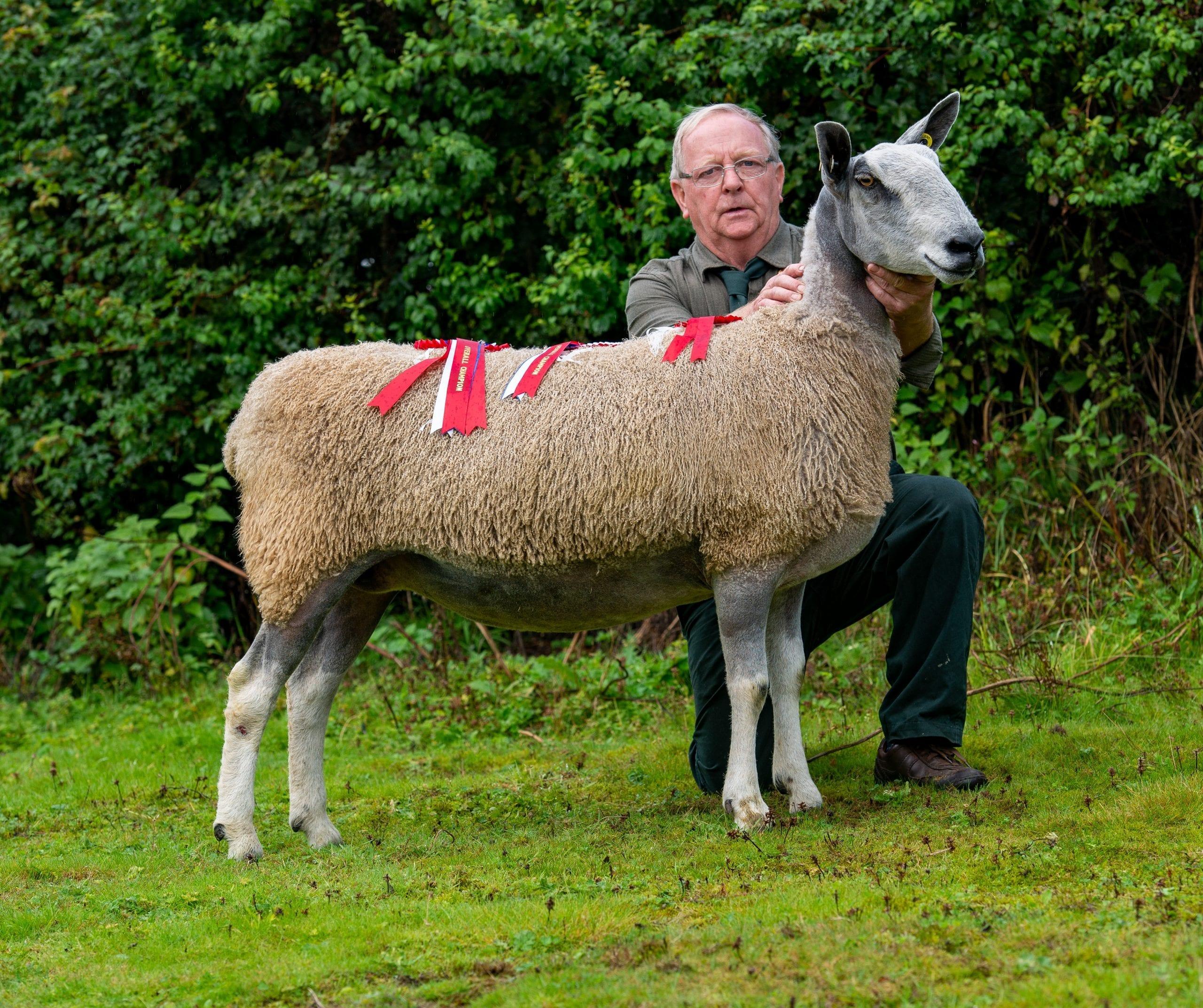 Welshpool Rams & Females Image