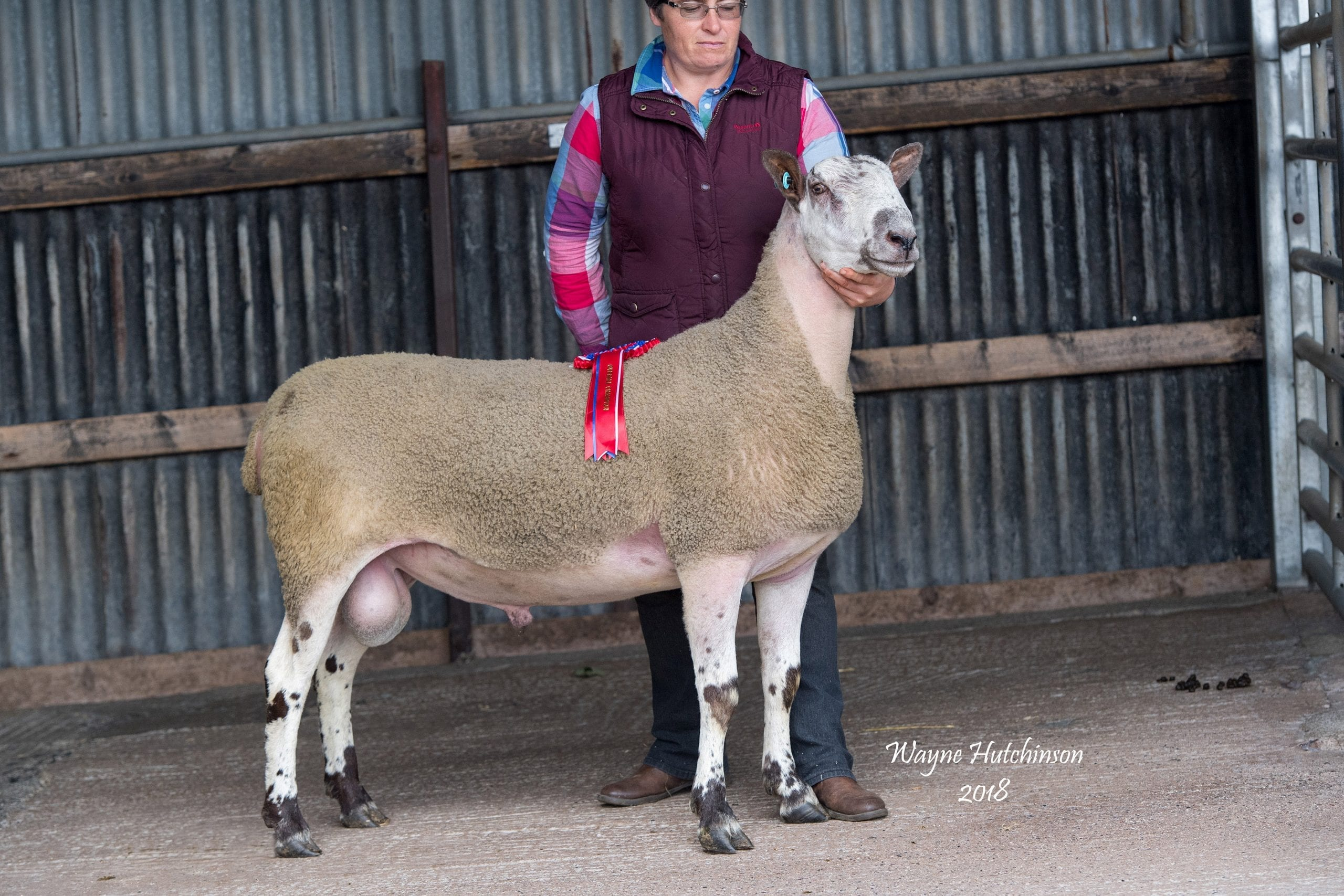 Castle Douglas Ram Sale Sale Reports