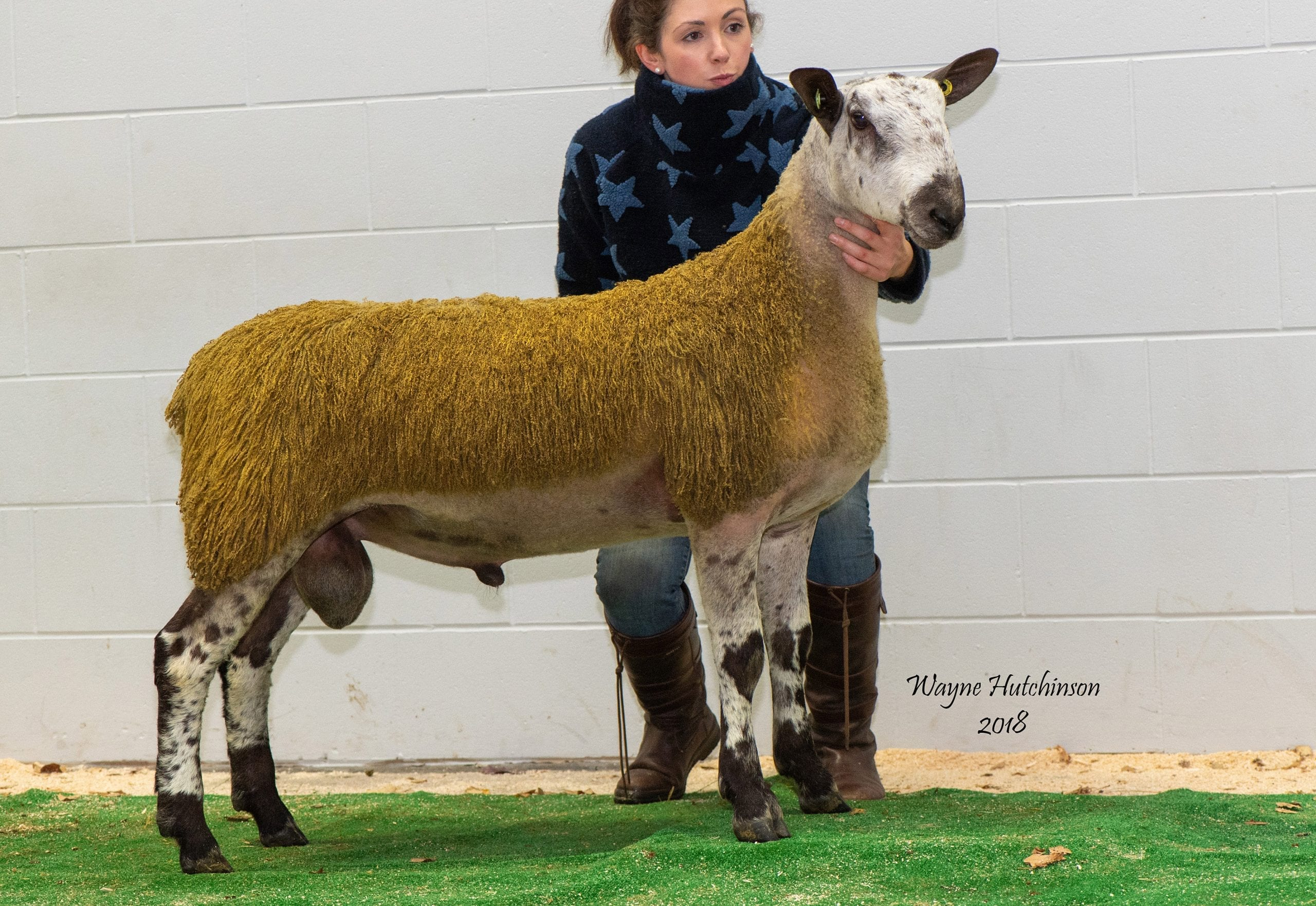 Carlisle Rams and Females Crossing Type Sale Reports