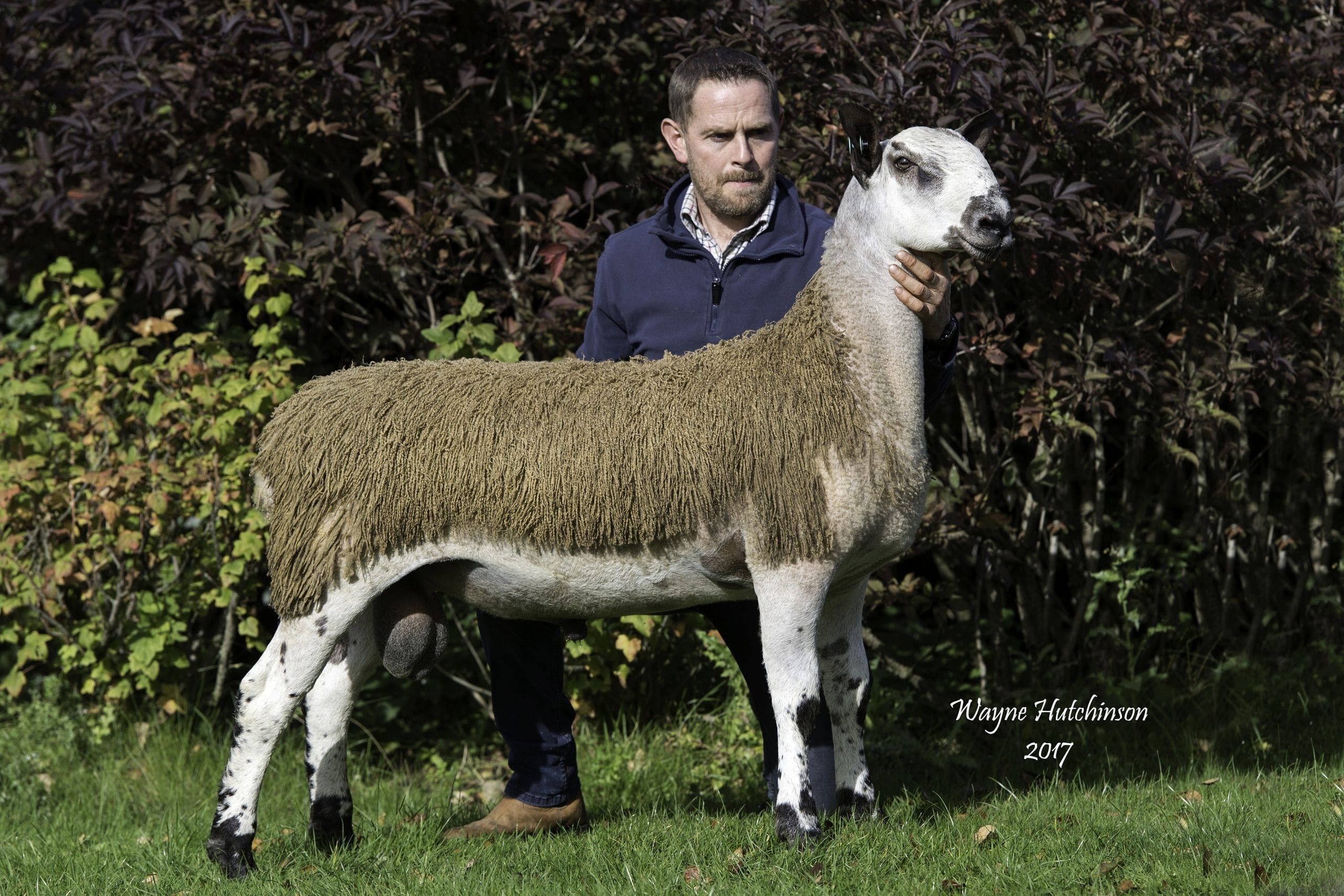 Carlisle Ram & Female Sale – Crossing Type Sale Reports