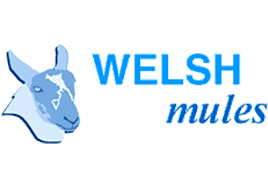 Welsh Mule Sheep Breeders Association