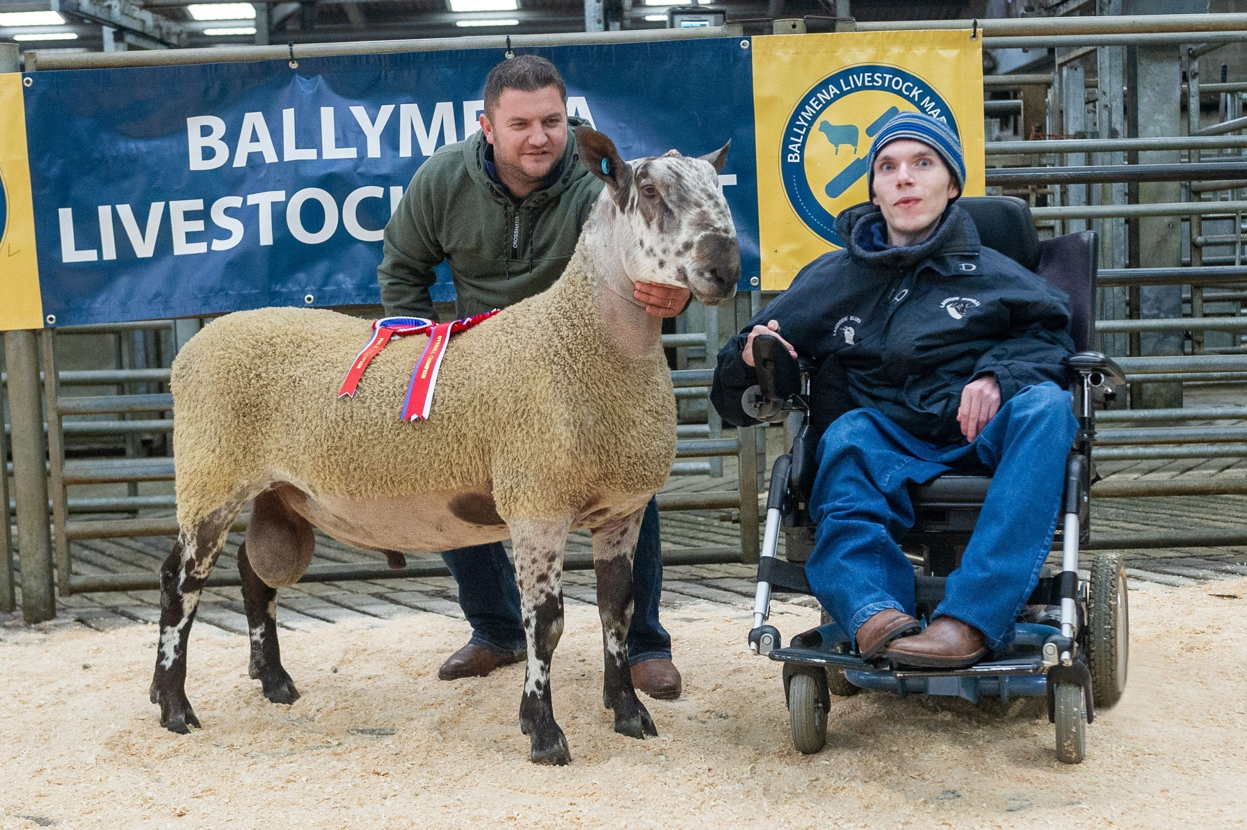 Ballymena Rams and Females Sale Reports