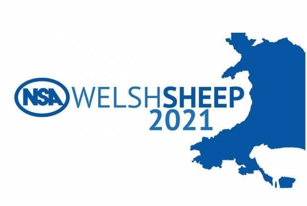 NSA Welsh Sheep Icon