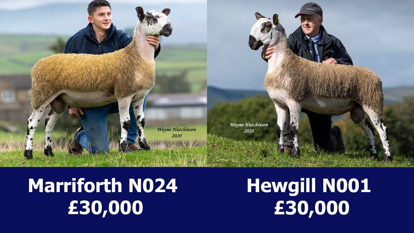 Hawes Sale Reports