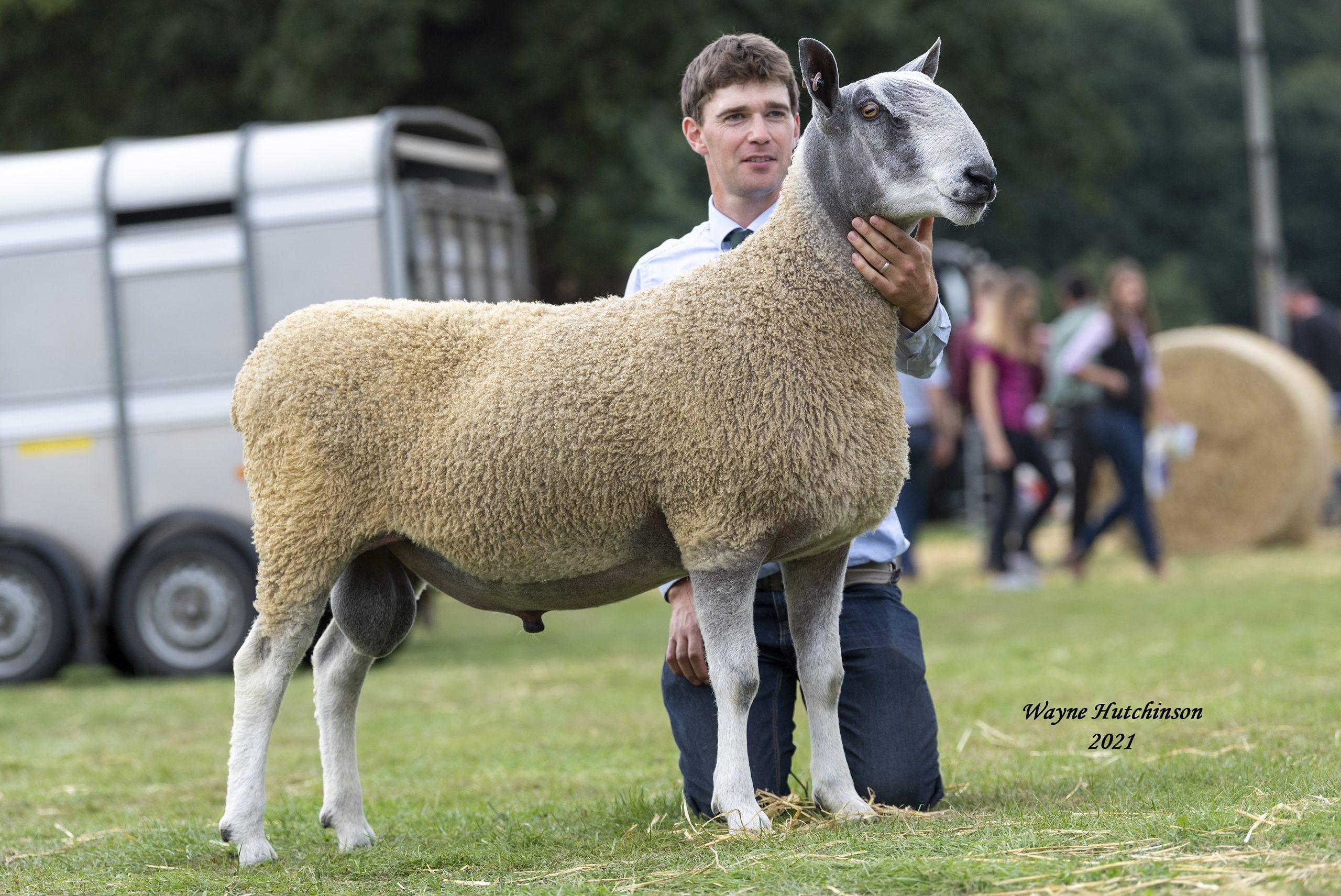 Kelso Ram Sales, 2021 Traditional  Image